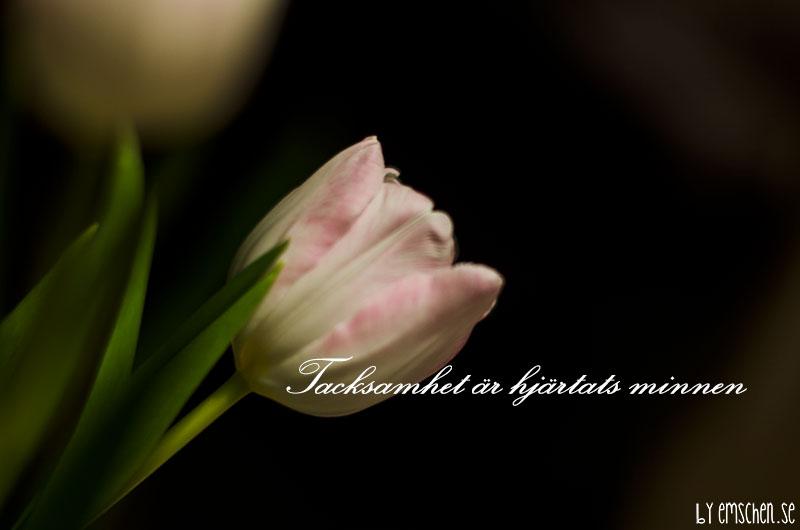 Att försvinna in i tacksamhet