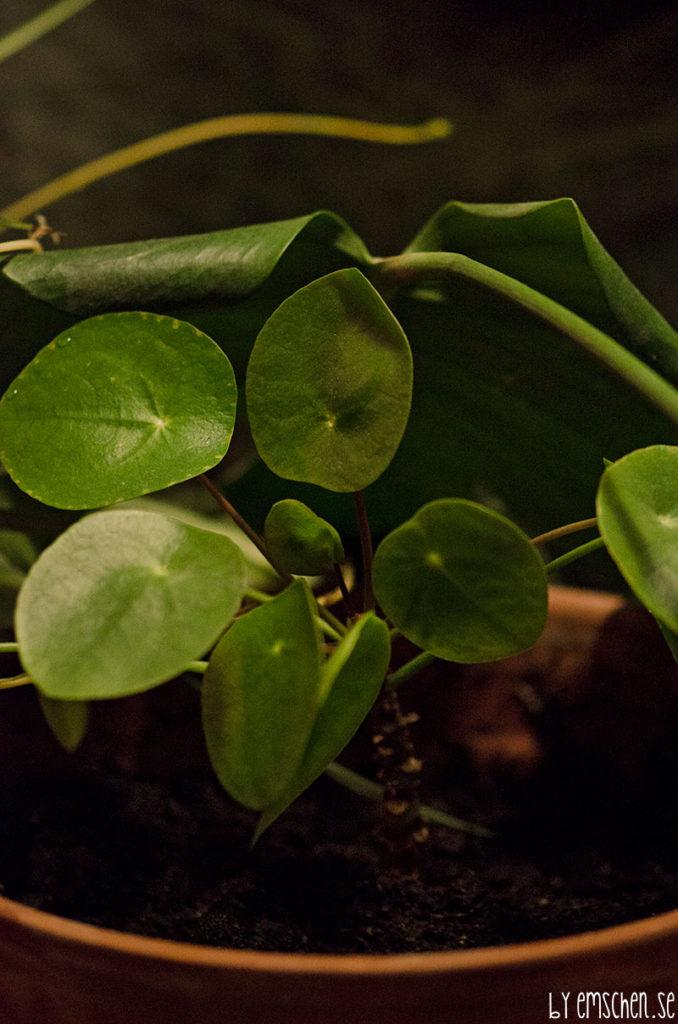 Gröna blad och fladdrande lågor