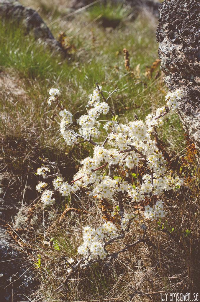Blommor och blad, en miljard