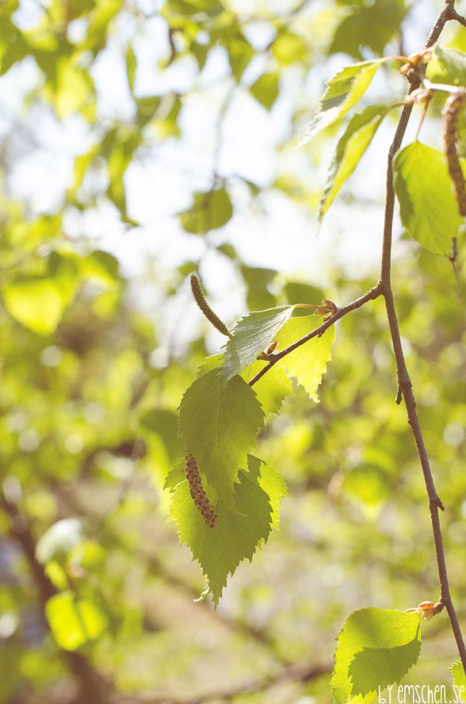 Nu grönskar det i dalens famn