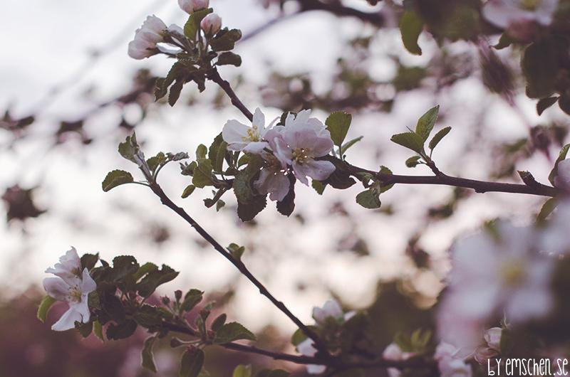 I min lilla lilla värld av blommor