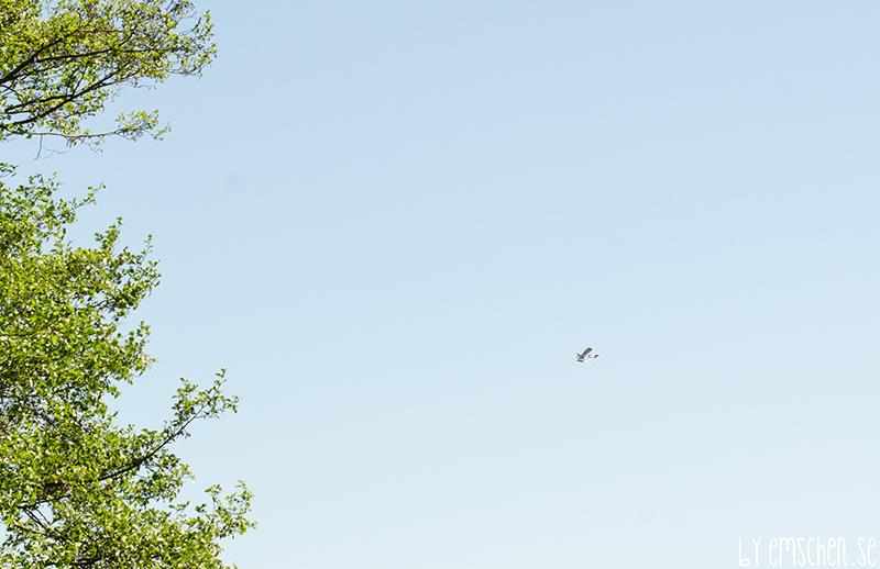Blå blå himmel