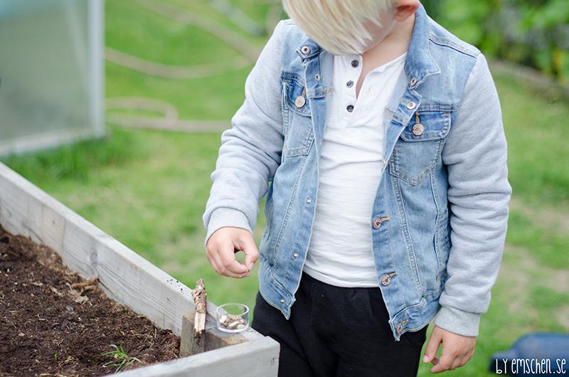 Trädgårdstider med Alfred