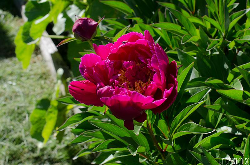 I min lilla trädgård